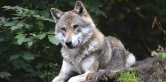 """LEGGE SULLA CACCIA: *trasformata in una legge sull'uccisione degli animali"""""""