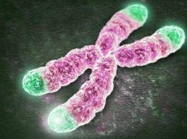 TELOMERASI: l'enzima che riporta indietro il tempo